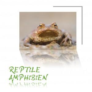 Base_Amphibiens