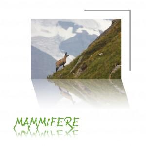 Base_Mammiferes
