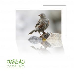 Base_oiseaux