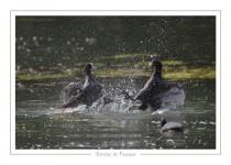 oiseau_-10