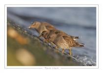 oiseau_-100