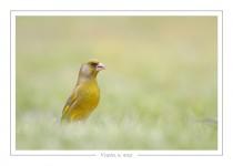 oiseau_-102