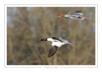 oiseau_-103