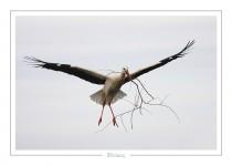 oiseau_-18