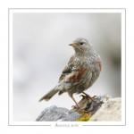 oiseau_-2