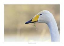 oiseau_-22