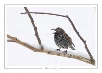 oiseau_-23