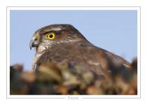 oiseau_-27