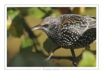 oiseau_-29