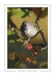 oiseau_-31