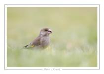 oiseau_-32