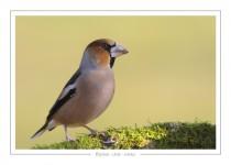 oiseau_-34