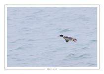 oiseau_-35