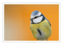 oiseau_-37