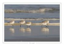 oiseau_-38