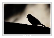 oiseau_-43
