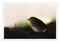 oiseau_-49