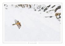 oiseau_-50