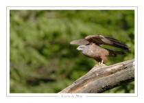 oiseau_-52
