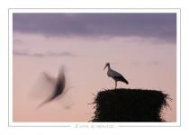 oiseau_-53