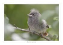 oiseau_-54