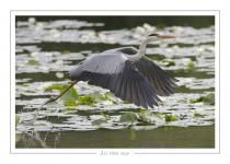 oiseau_-56
