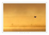 oiseau_-57