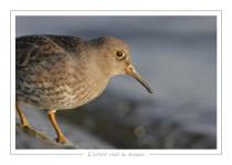 oiseau_-58