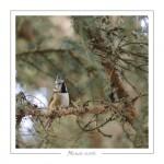 oiseau_-59