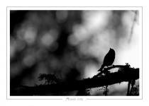 oiseau_-60