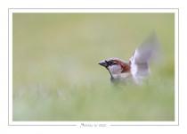 oiseau_-61