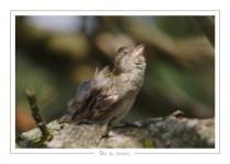 oiseau_-64
