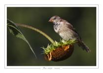oiseau_-67