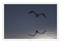 oiseau_-69