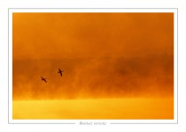 oiseau_-7