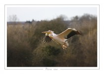 oiseau_-76