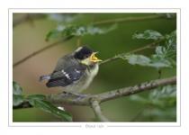 oiseau_-78