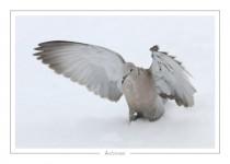 oiseau_-8