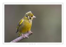 oiseau_-80