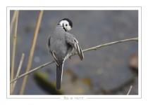 oiseau_-81