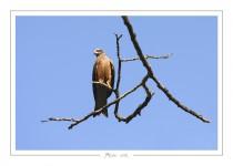 oiseau_-83