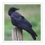 oiseau_-86