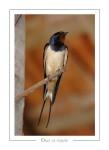 oiseau_-87