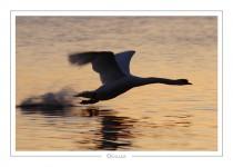 oiseau_-89