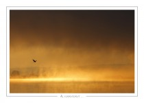 oiseau_-9