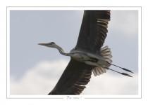 oiseau_-92