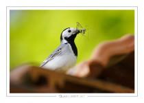 oiseau_-93