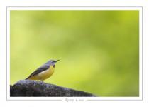 oiseau_-94