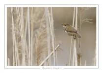 oiseau_-95