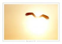 oiseau_-96